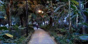 Promenade dans ce qui est presque une forêt urbaine, en  la Condesa de Mexico