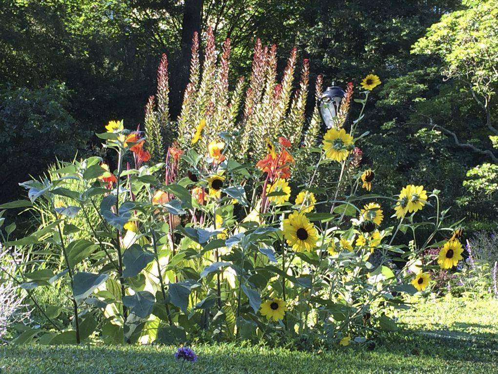 conservatory garden en été - 4 photos