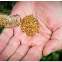 Une plante génétiquement modifiée produit des phéromones sexuelles d'insectes comme alternative aux pesticides