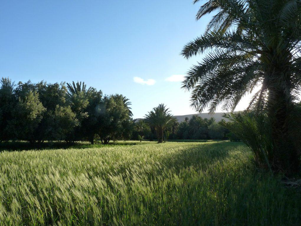 Printemps 2011 : d'Azrou à Zagora par Merzouga