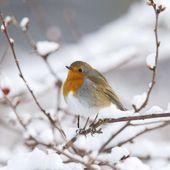 Les oiseaux aussi souffrent du froid, voici comment les aider - Sciencesetavenir.fr
