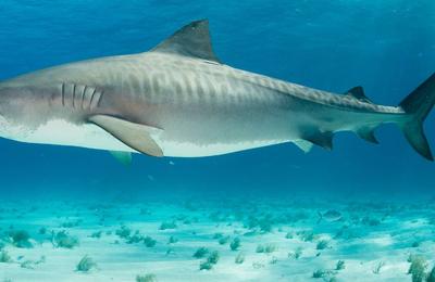 Un plaisancier tué par un requin en Nouvelle-Calédonie