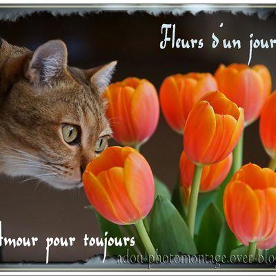 Fleur chat
