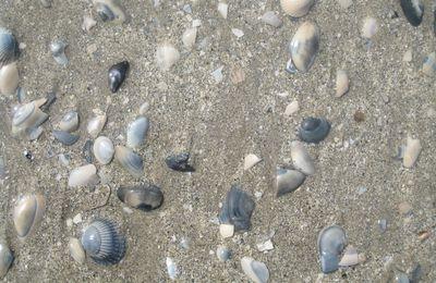 La côte picarde le 24 avril 2013