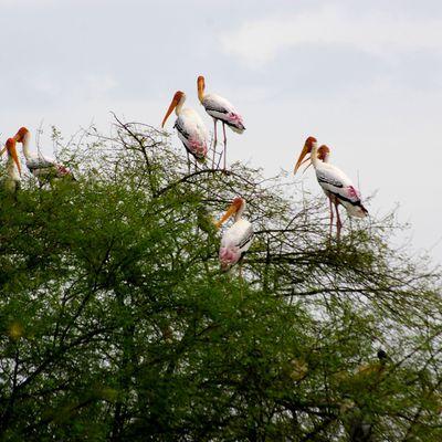 Bharatpur, Keoladeo Ghana National Park