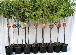 I trattamenti per le piante da frutto