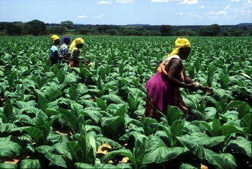 Imágenes de Zimbabwe.- El Muni.