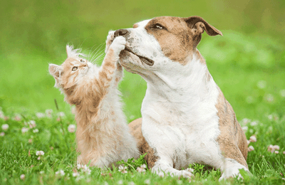 Des astuces pour faire cohabiter chien et chat dans la maison