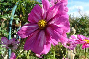 le clos fleuri en septembre 2010