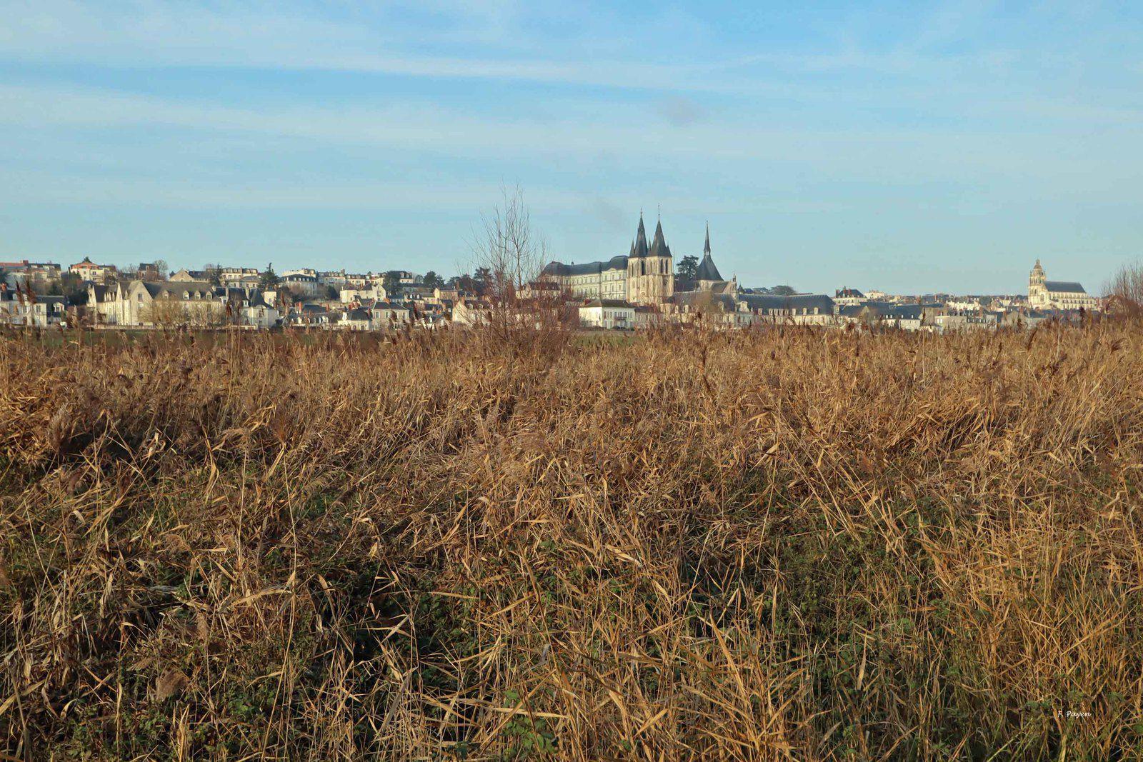 Bords de Loire à Blois