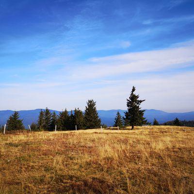 Sur les chaumes du Schelmeck - Sortie montagnisme Wascalade - 20/09/2020