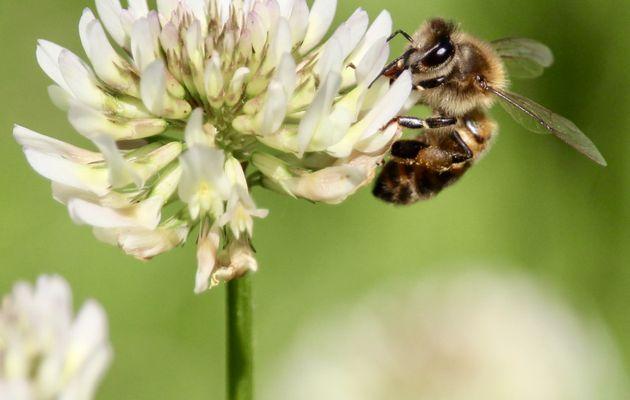 Propolia : les trésors de la ruche au service de notre bien-être