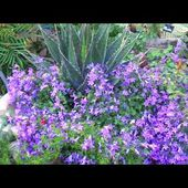 Jardin Le Clos Fleuri à Chabeuil 26