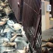 Privée d'un contrat, une entreprise de sécurité abat 24 de ses chiens