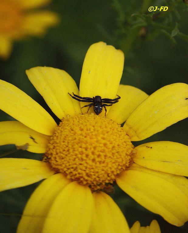 Album - Fleurs et insectes d'Italie (2)