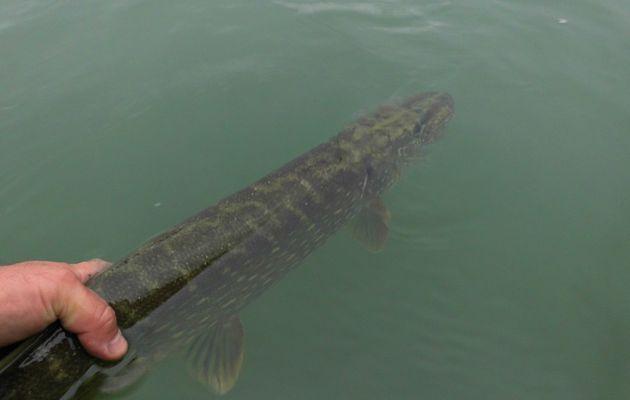 Lac de Madine, du vent et des poissons, la journée à 10 touches.