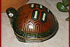 Glücksbringer Schildkröte