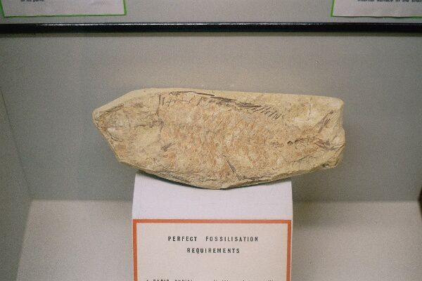 <p>Cet album vous présente des prises de vue de notre voyage maltais de janvier 2006, notamment une variété de fossiles exposés au Muséum de Mdina.</p>  <p>Ce pays riche en fossiles est également une destination rêvée pour l'archéologie et la préhistoire.</p>  <p>Bon voyage virtuel !</p>  <p>Phil « Fossil »</p>