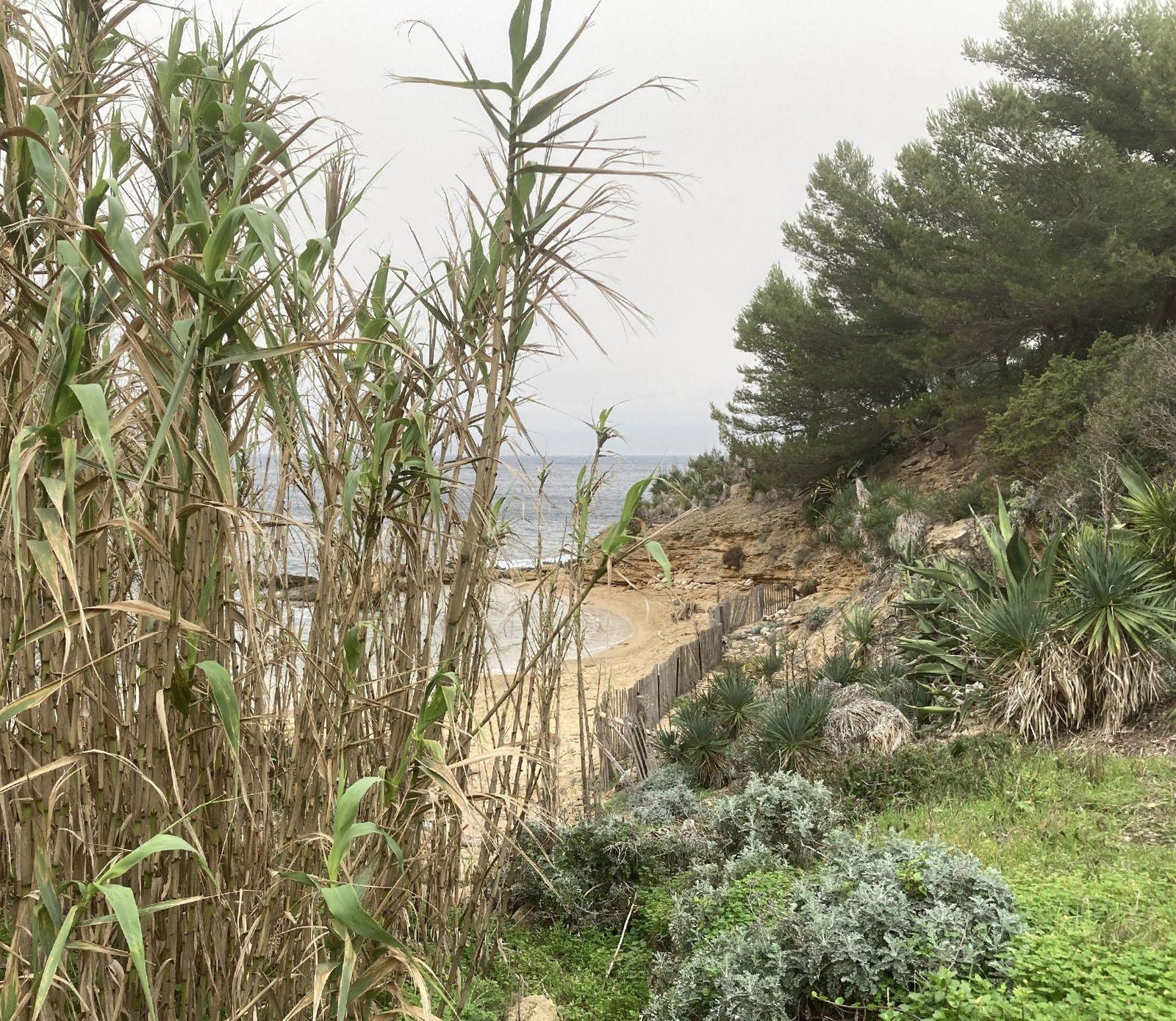 La plage des Grottes - 6 février 2021