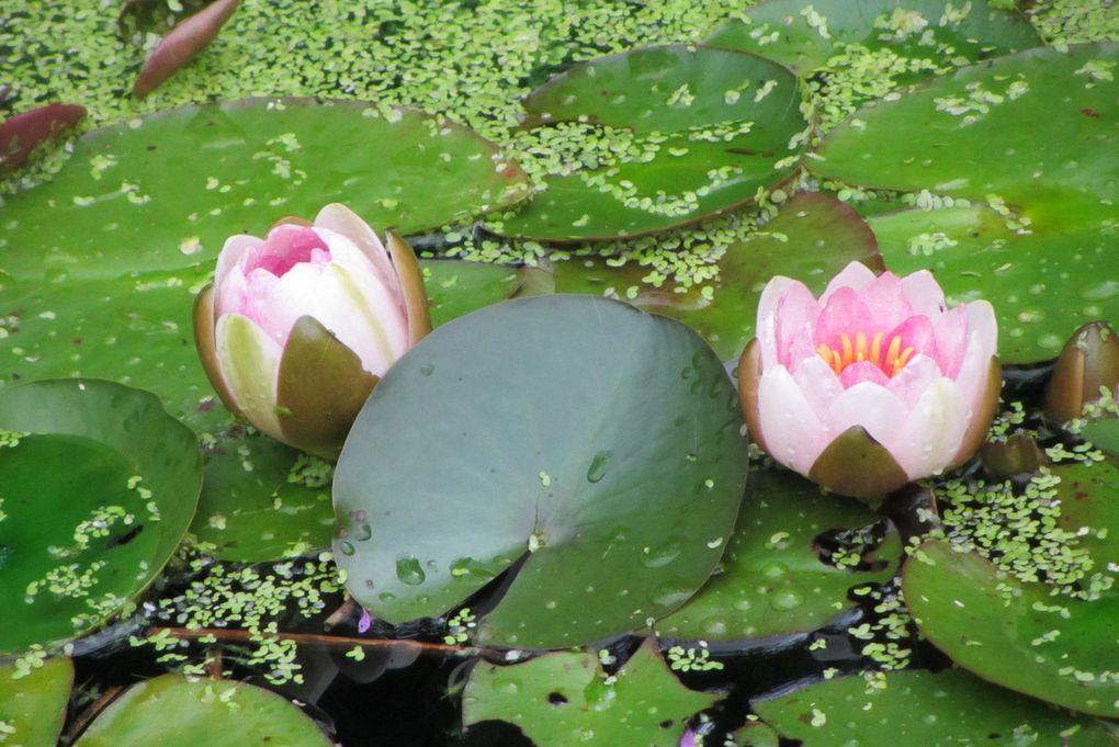 Chaumont sur Loire  Festival des jardins... et des bassins.
