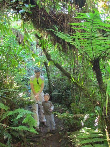 Tour du Piton Bebour dans la forêt de Bélouve - 10 mai 2013