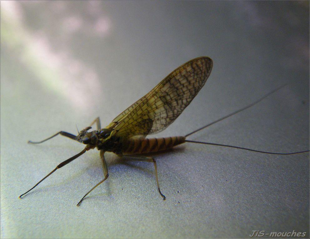 Quelques insectes....
