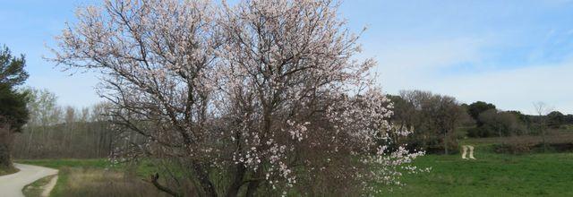 Aujourd'hui c'est le printemps...