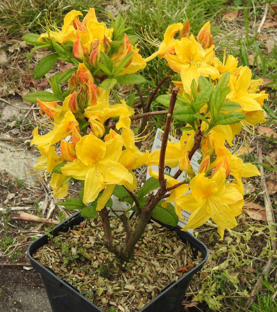 Quelques fleurs au jardin, mai 2021...
