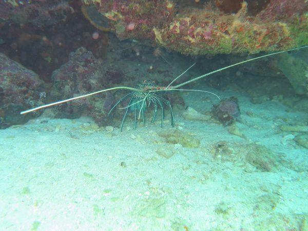 Une plongée sur le site de la patate bleue, au Sud de Mayotte le 03 avril 2013 avec Gustavo (Abalone Plongée)