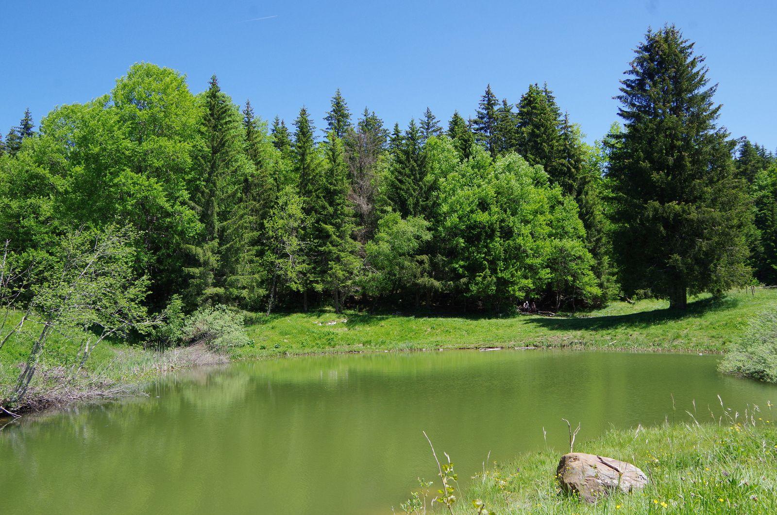 Balade botanique au lac du Mariet,