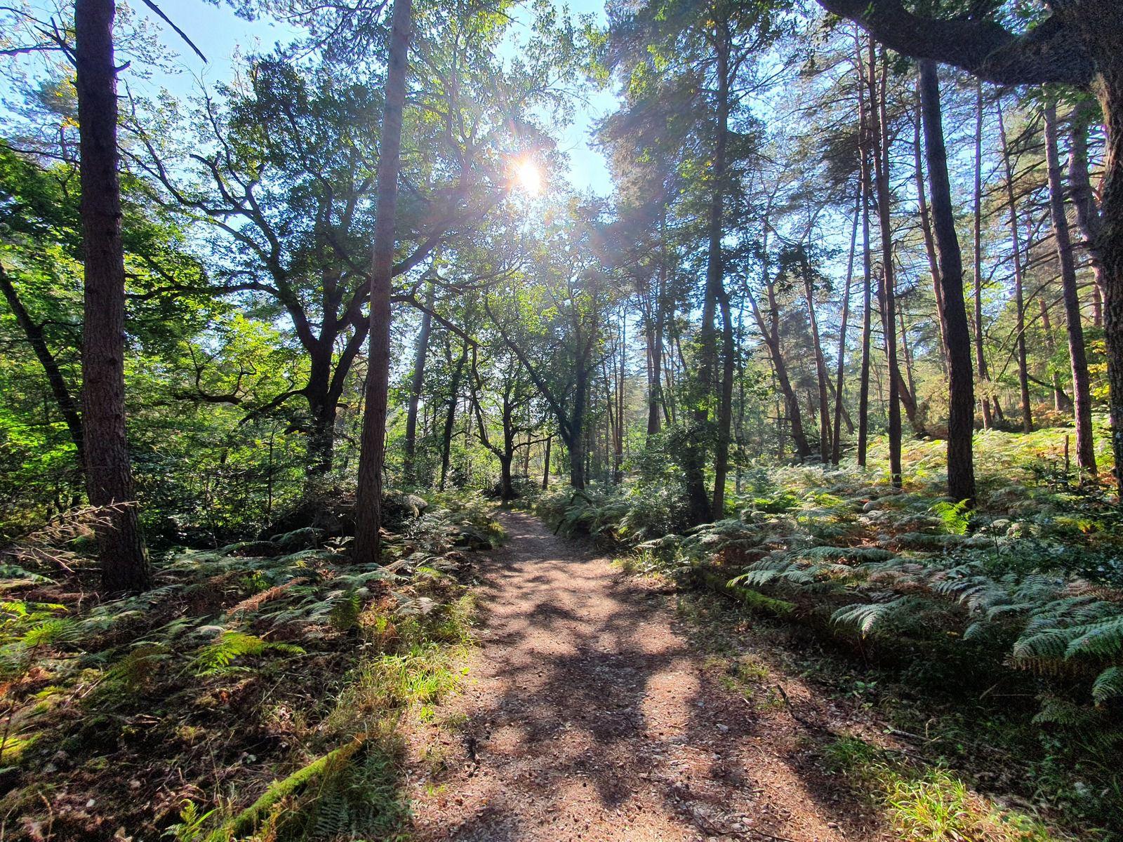 Route de Bellevue, Forêt de Fontainebleau