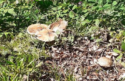 Nature : p'tits champis