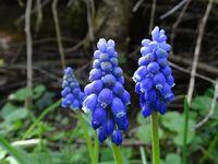 Dans mon jardin, il y a aussi des petites fleurs, des lézards, des insectes, des papillons, des hérissons… Photos : JLS (Cliquez pour agrandir)