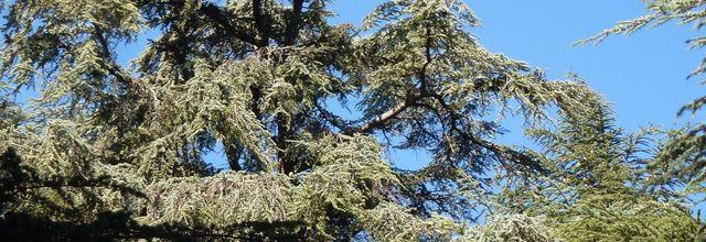 La Forêt des cèdres du Petit Luberon (4) / La Roque des Bancs et la bergerie troglodyte