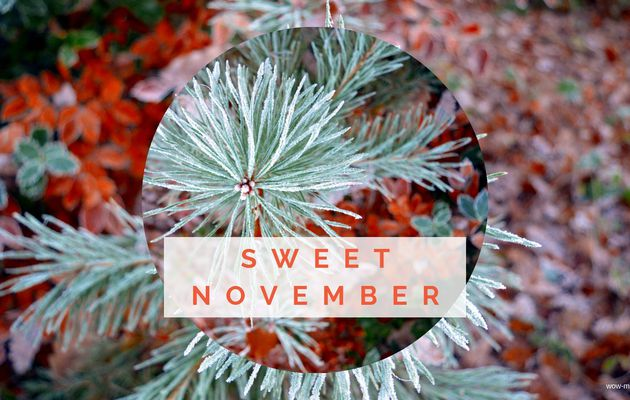 Fond d'écran Novembre 2018 { #freebies }