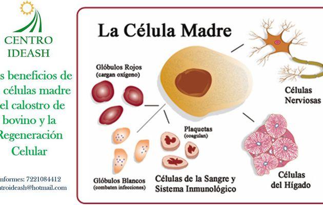 Células Madre, Factores de Crecimiento y transferencia