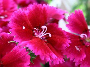 Quelques fleurs de mes jardinières