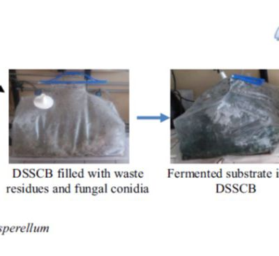 Development and Evaluation of a Disposable Solid-State Culture Packed-BedBioreactor for the Production of Conidiafrom Trichoderma asperellum GrownUnder Water Stress