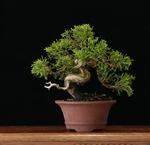 """Cycle """"Japon"""" - Conférence n°3 - Combattre la nature, ou vivre en harmonie avec elle ?"""