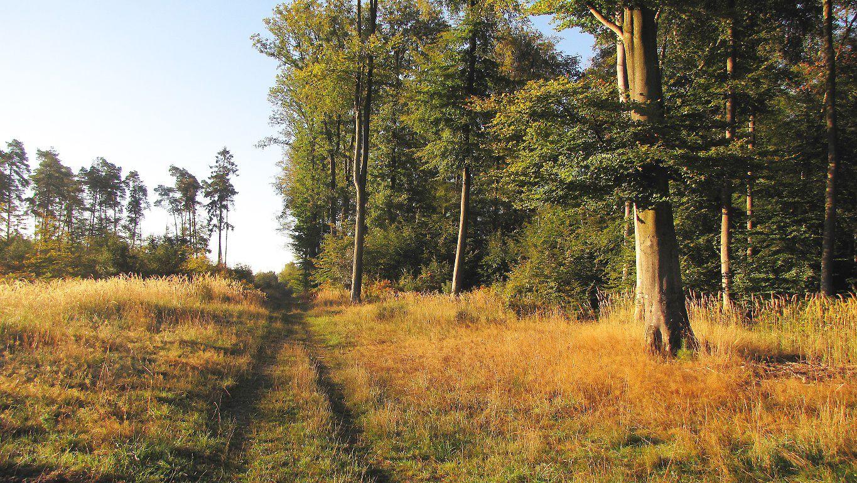 carrefour_Route des Pendants Mathieu_Route du Voliard