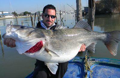Pêche au Bar (1/6) - Le Bar, le roi des poissons de mer