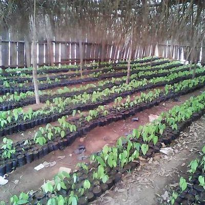 Permaculture au Cameroun - Permaculture in Cameroon