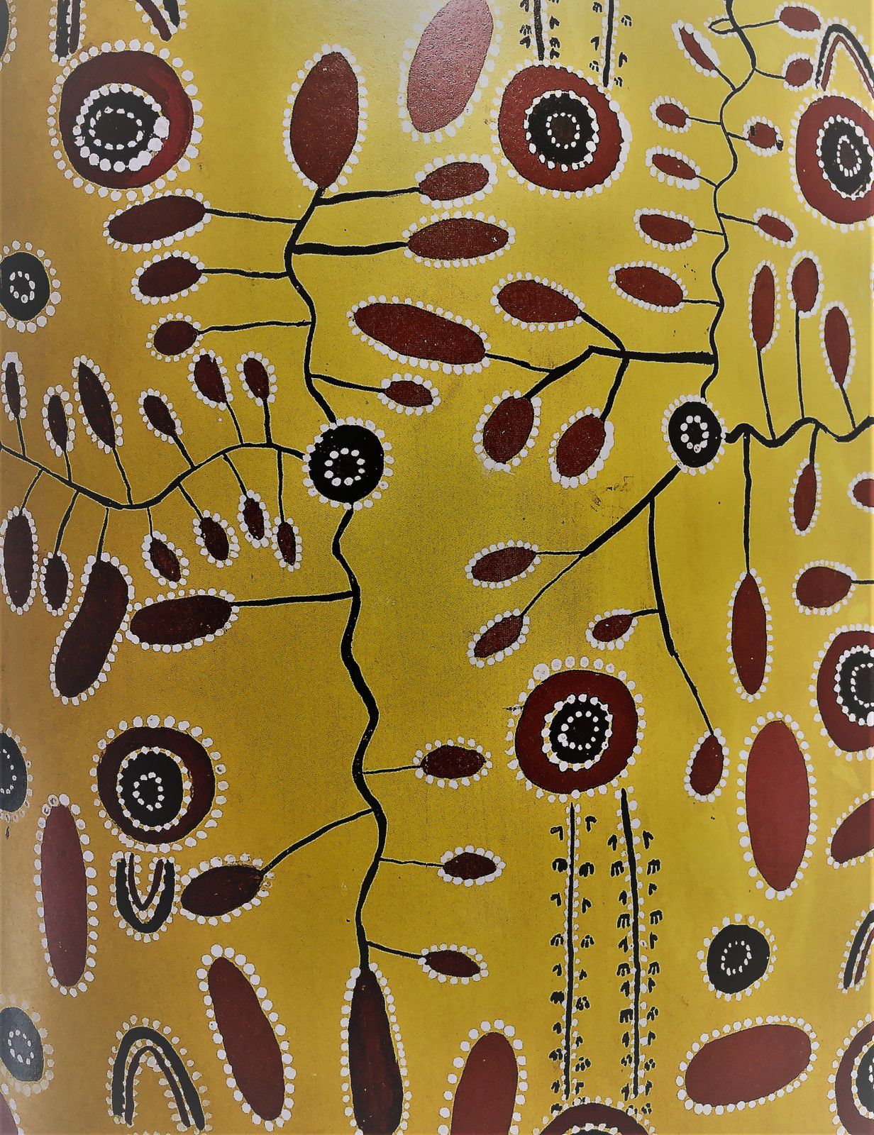 Wild Potato Dreaming, Bill Stockman Tjapaltjarri
