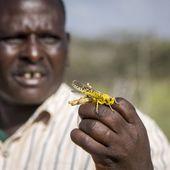 Des essaims de criquets dévastent de larges zones d'Afrique de l'Est - MOINS de BIENS PLUS de LIENS