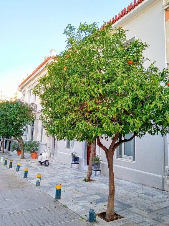 La marmelade d'oranges amères ou le cadeau des rues athéniennes