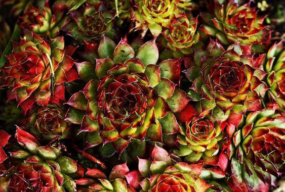 Wish List #72: des plantes!
