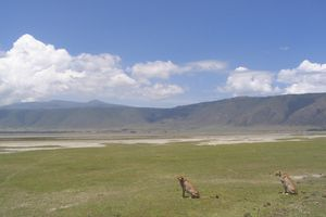 Rencontre au Ngorongoro...