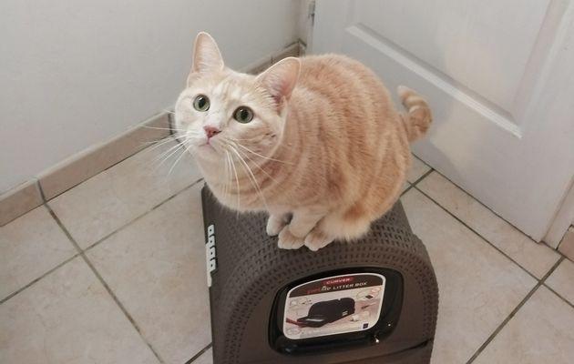 Oliver a testé la maison de toilette Curver !