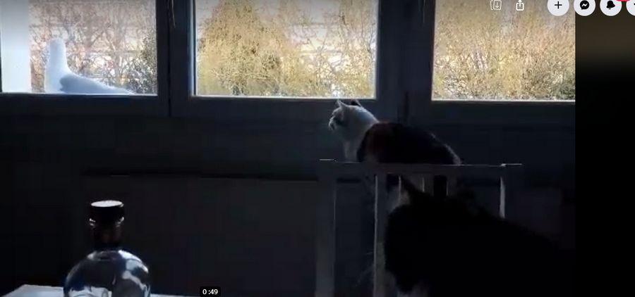 un visiteur qui n'a pas peur des chats