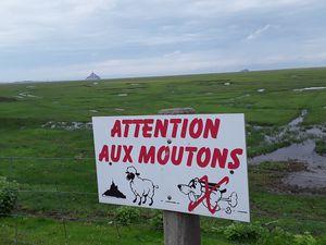 Au loin le Mont Saint-Michel.